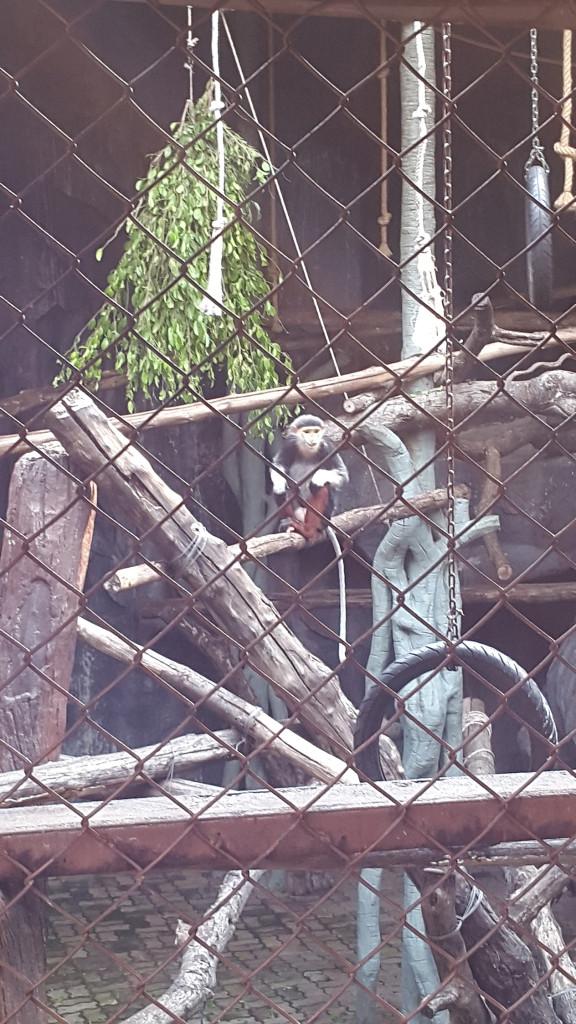 Стильная обезьянка