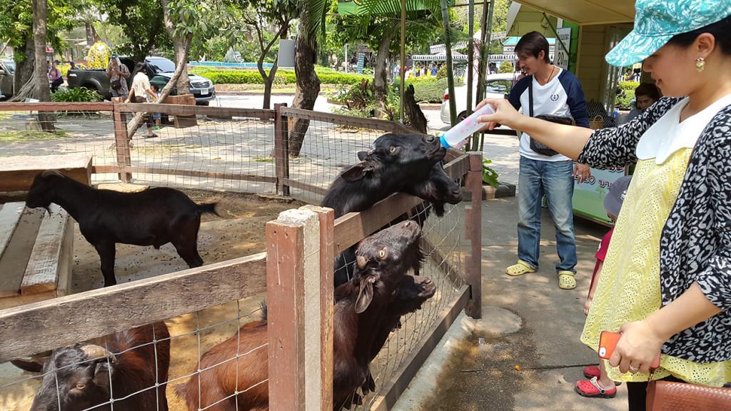 Ненасытные козы