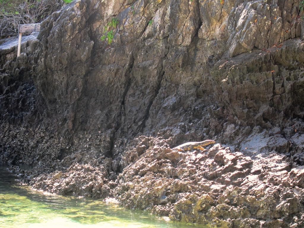 На острове нас встречал воран). Туристка, которая наткнулась на него в воде очень громко кричала))).