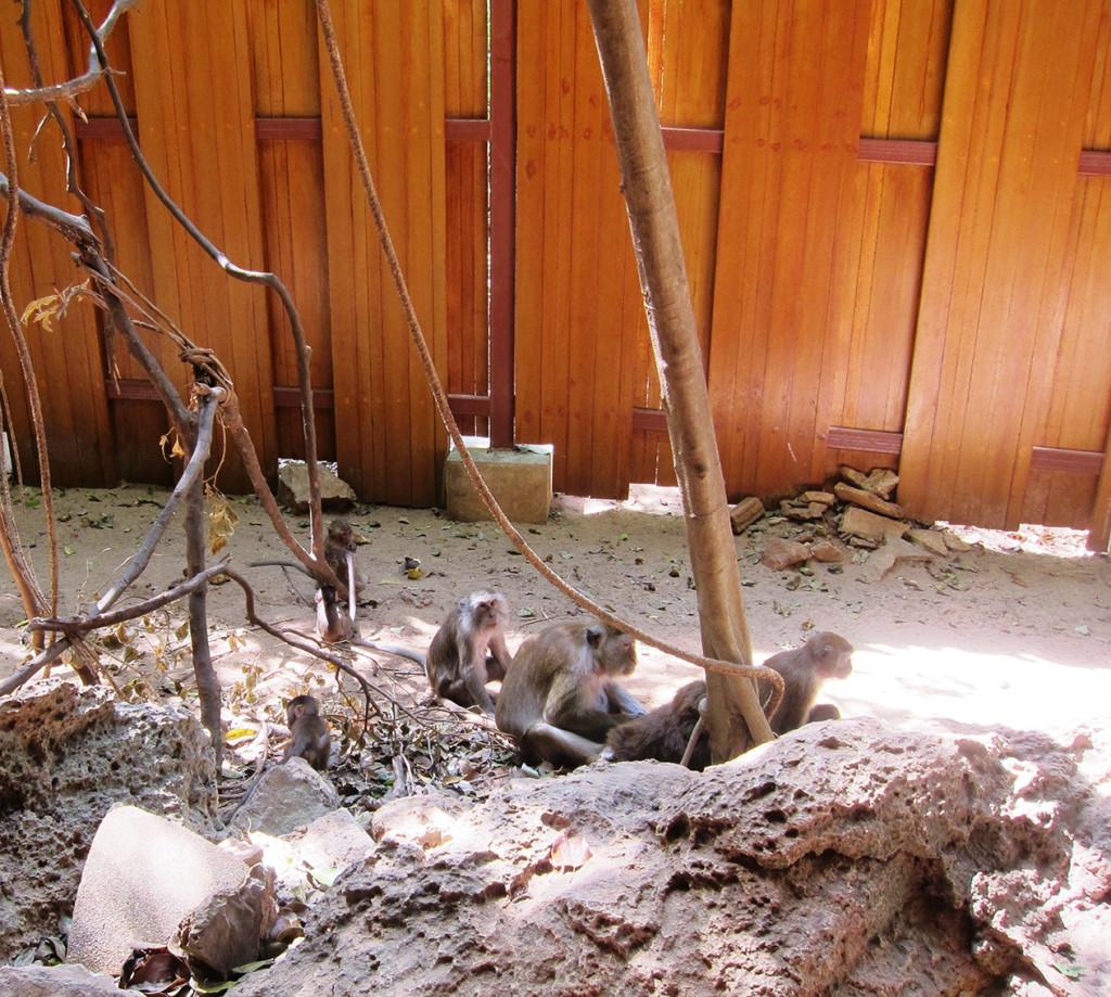 Также на пути вам встретится множество обезьянок. Так что на экскурсии к острову обезьян можно точно сэкономить.