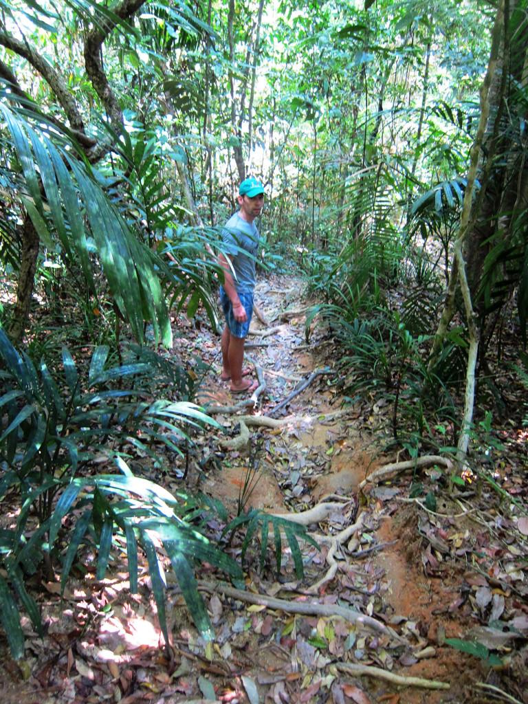 В джунглях.
