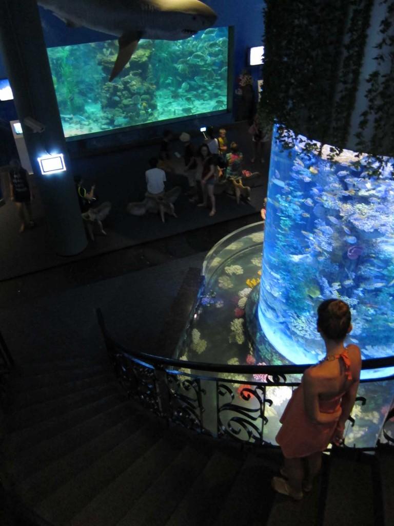 Внизу трэвалатор, который ведет по кругу и с которого можно совершить экскурсию по морским глубинам.