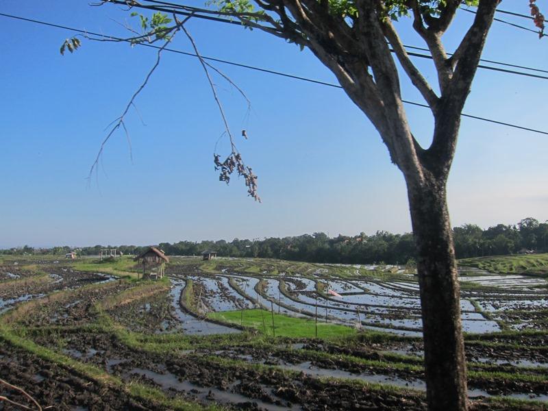 И на любование рисовыми полями.