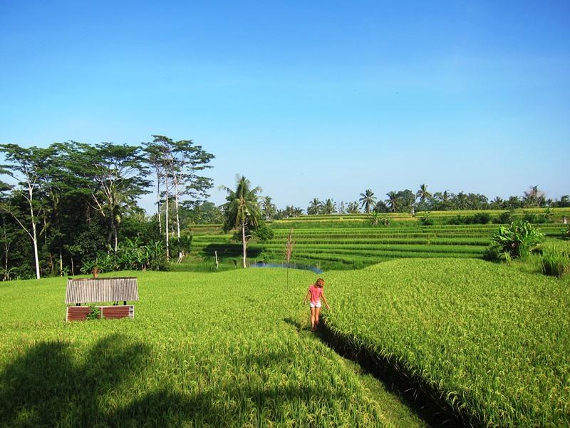 О красивейших рисовых полях.